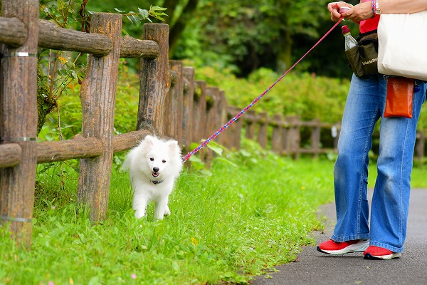 ワンちゃんとの散歩