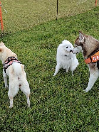 他の犬とのかかわり