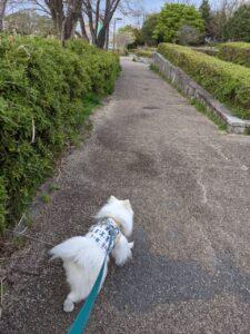 犬の散歩中の反応